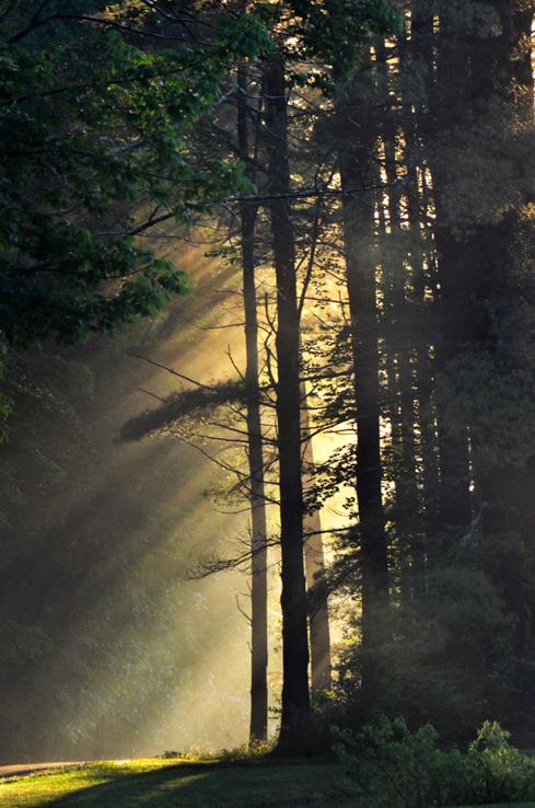 Morning Light-1c